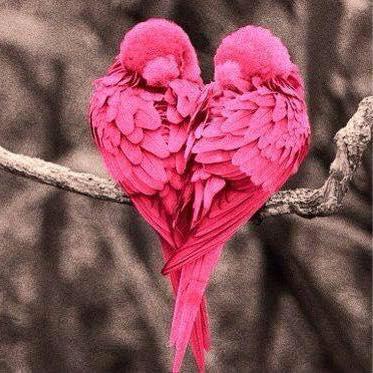 pink love birds